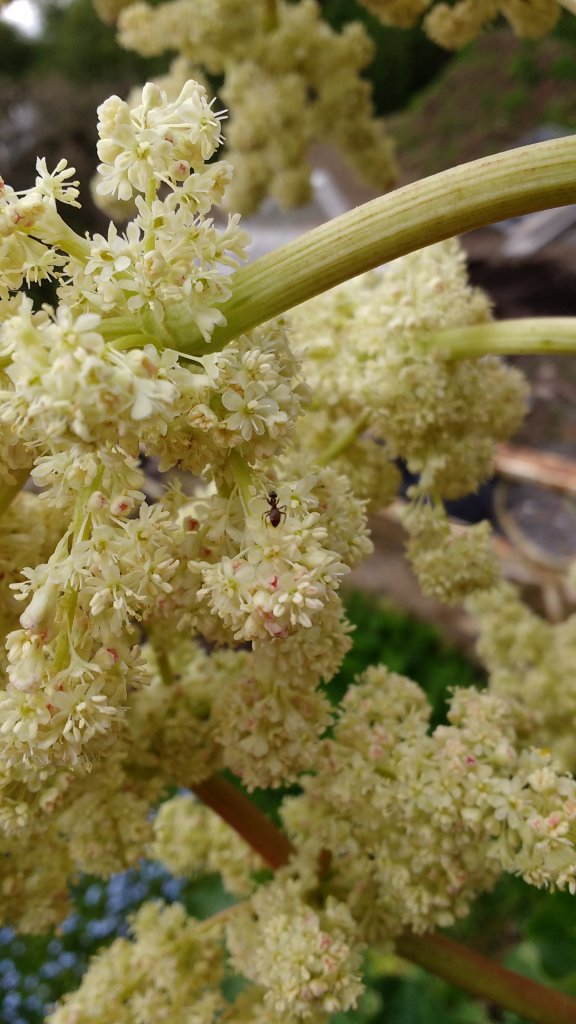 Super Gartenkram – willkommen im sichtbaren Teil des Vorgartens meines FR47