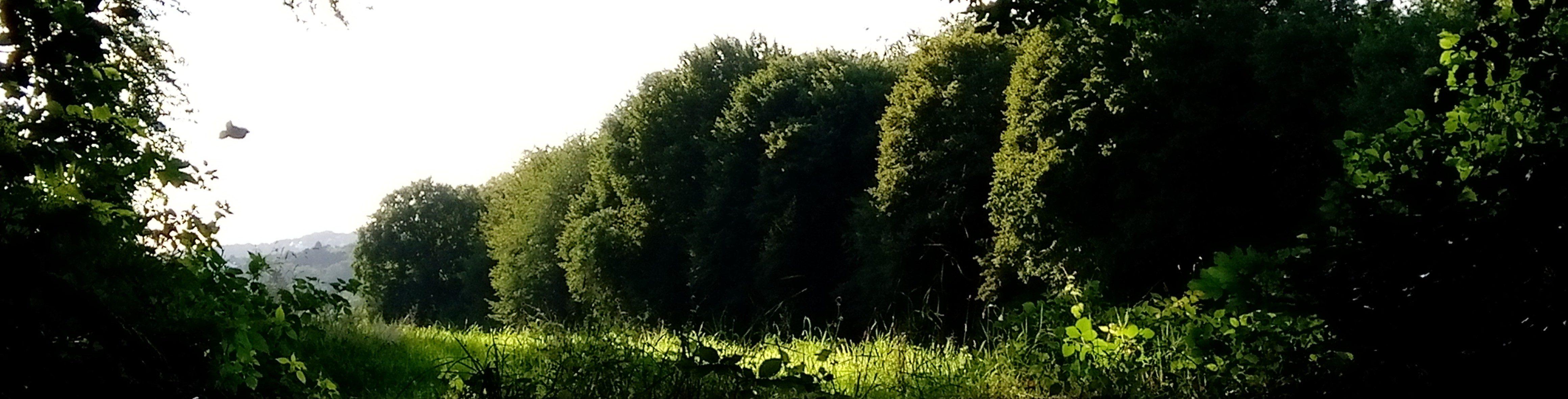 willkommen im sichtbaren Teil des Vorgartens meines Gehirns